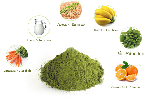 Chùm ngây giàu vitamin A, C giúp da trị nám.